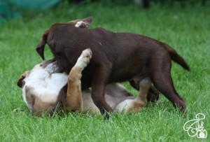 Welpen Spiel im Gras