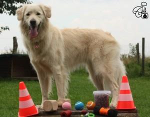 Clicker Training Hund