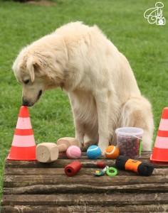 Hund Clickertraining