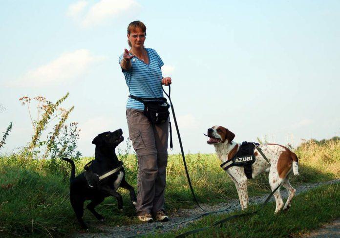 Hunde bekommen Leckerlies, Foto: Melanie
