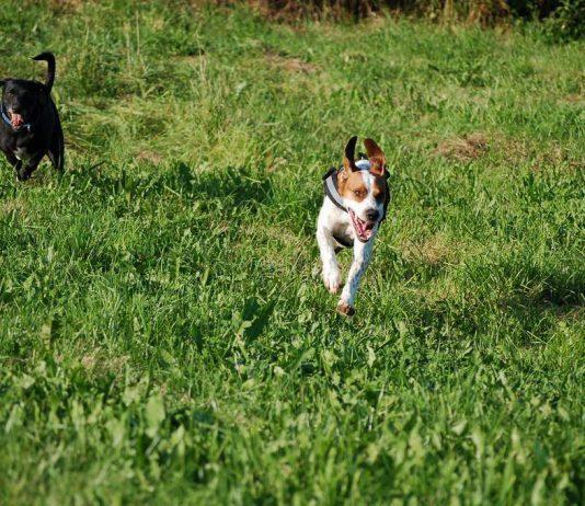 Hund kommt angerannt, Foto: Melanie