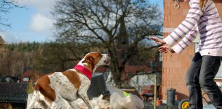 Hund bellt,  Foto: Melanie