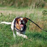 Hund zeigt Aggresion