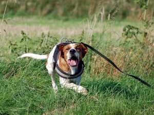 Symbolfoto Aggressiver Hund