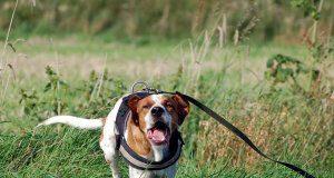 hund-aggressionen