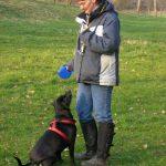 Gehorsamstraining bei Hunden mit einem Aggressionsproblem (Teil 4)