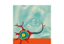 Neuropsychologie des Hundes von James O'Heare