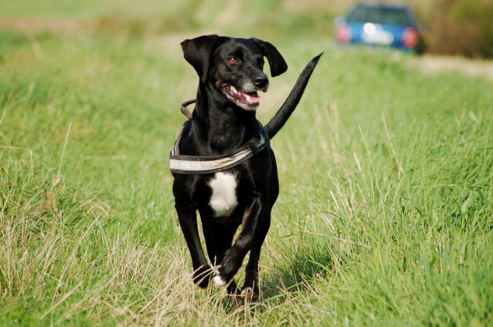 Rennender Hund, Foto: Melanie