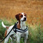 Beschäftigungsmöglichkeiten für den Hund beim Spaziergang