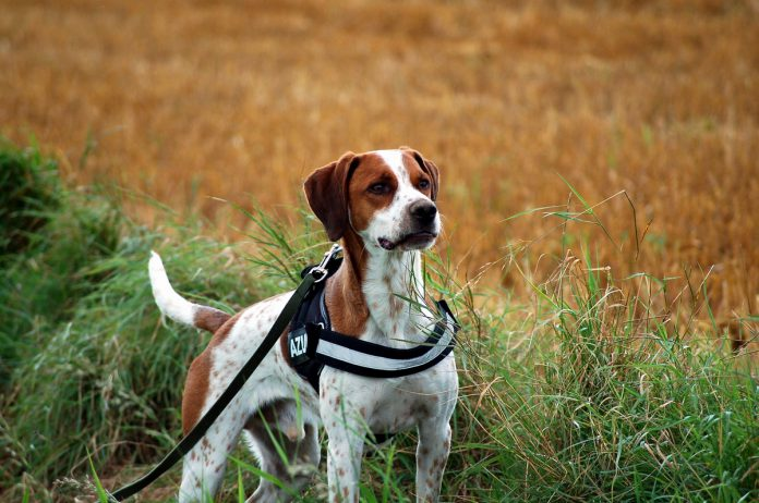 Hund an der Schleppleine, Foto: Melanie