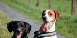 Zwei Hunde machen Sitz, Foto: Melanie