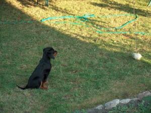 Hund Antijagdtraining