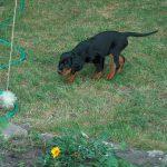 Antijagdtraining: Hunde vom Jagen abhalten