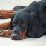 Beliebte Irrtümer über Hunde