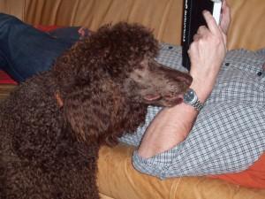 community forum erziehung verhalten hund nachts unruhig