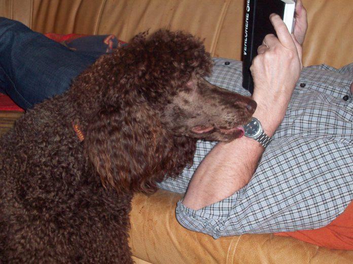 Hund ignorieren