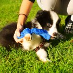 Hundezuchtvereine und Papiere – Augen auf beim Hundekauf – Teil 3