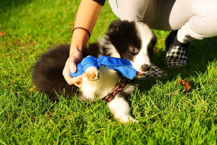 Welpe spielt, Foto: Nina
