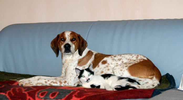 Hund und Katze, Foto: Melanie