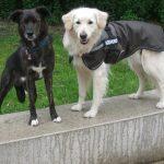 Braucht mein Hund einen Mantel?