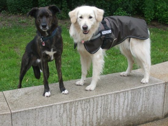 Regenmantel für den Hund