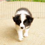 Hundezucht und Gene – Augen auf beim Hundekauf – Teil 2