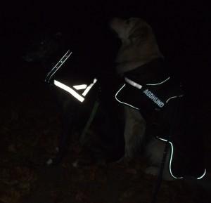 Hunde Reflektorgeschirre und Reflektorhalsbänder