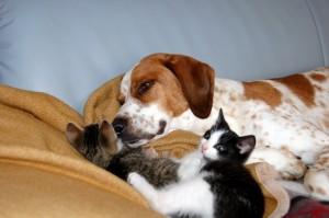 Hund mit kleinen Kitten