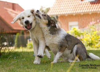 Zwei Welpen am Spielen, Foto: Connie