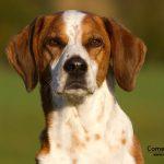 Kosten für einen Hund: Kann ich mir ein Tier leisten?