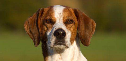 Hund Kosten, Foto: Connie