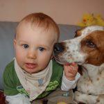 Baby & Hund – Funktioniert das?