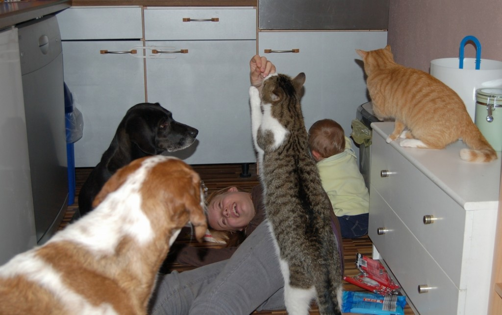 Kind Hunde Katze