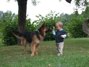 Hund mit Schäferhund