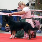Hundeausstellungen: Von der Geschichte bis zum Ablauf
