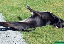 hund-erste-hilfe-krampfanfall