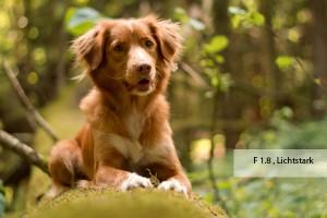 Hundefotografie richtig gemacht