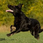Tierfotografie im Überblick: Von der Kamera bis zum Objektiv