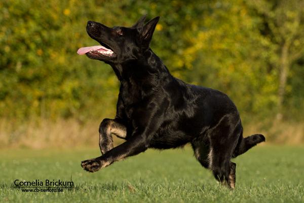 Tierfotografie - Hund
