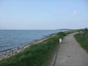 Hund geht am Strand spazieren