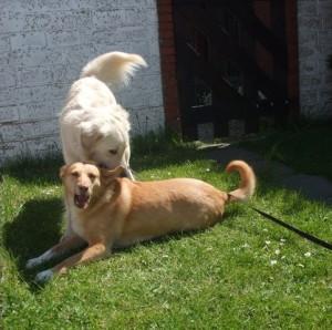 Hunde vorm Gartentor