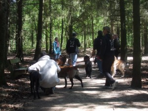 Hunde beim Gruppenspaziergang