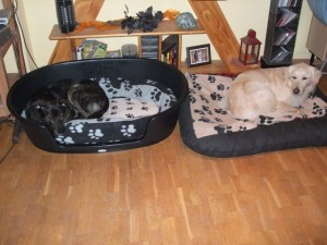 Hunde in der Wohnung
