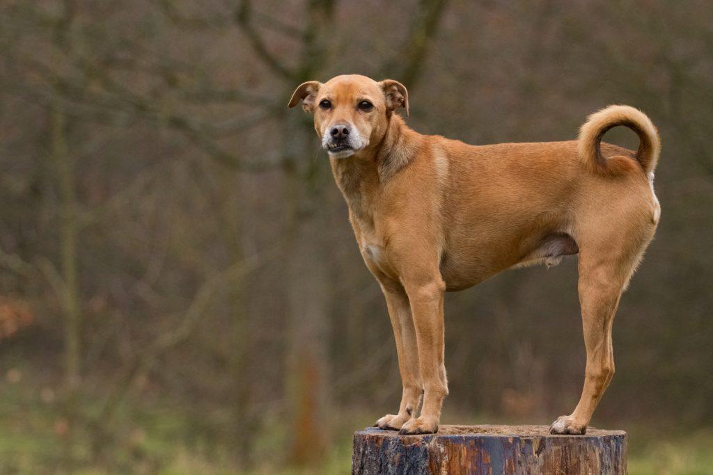 Hund auf Baumstumpf