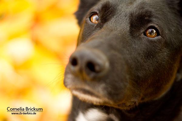 Kopf eines schwarzen Hundes mit der richtigen Verschlusszeit und Blende fotografiert