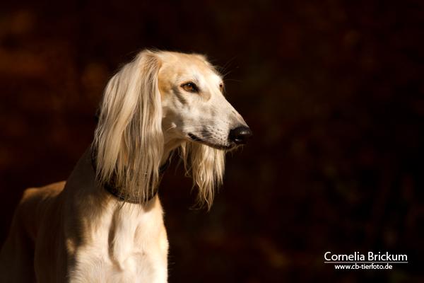 Hundeporträit richtig fotografieren