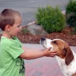 Zooanthroponose – Übertragbare Krankheiten vom Hund auf den Menschen