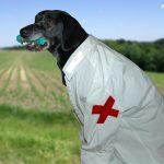 Stumpfe Verletzungen des Brustkorbes – Erste Hilfe für den Hund