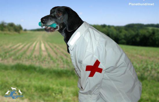 Hund Erste Hilfe Dr. Who