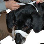 Hund Maulschlaufe